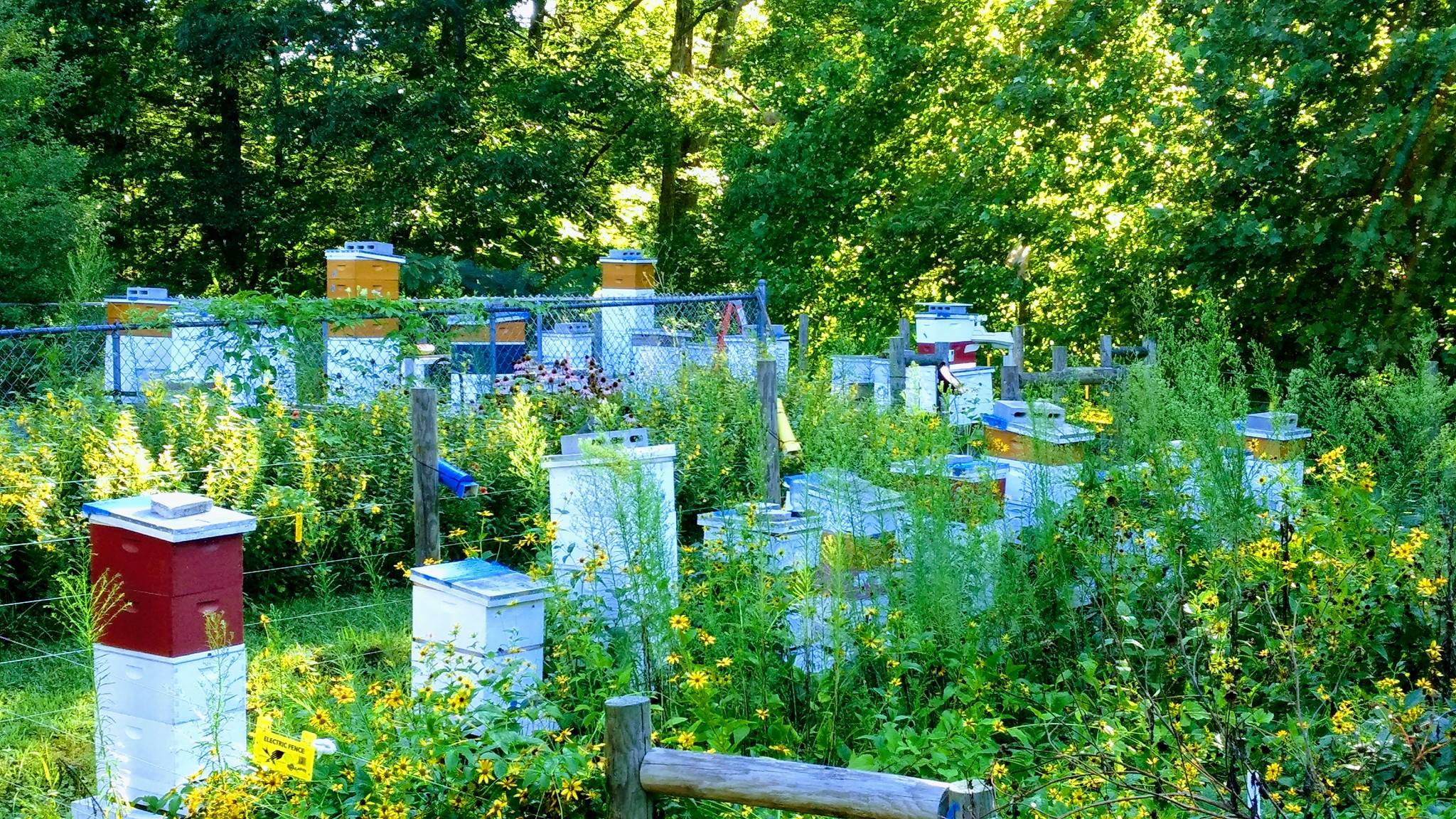 PIC OF BEE YARD IN SUMMER AND BLOOMING FLOWERS.MFH BNBS